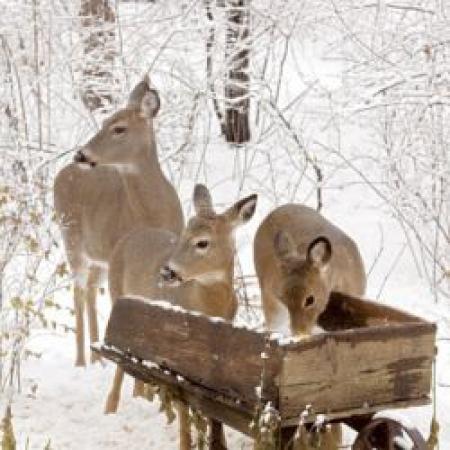 Dokarmianie ptaków i zwierząt leśnych podczas zimy